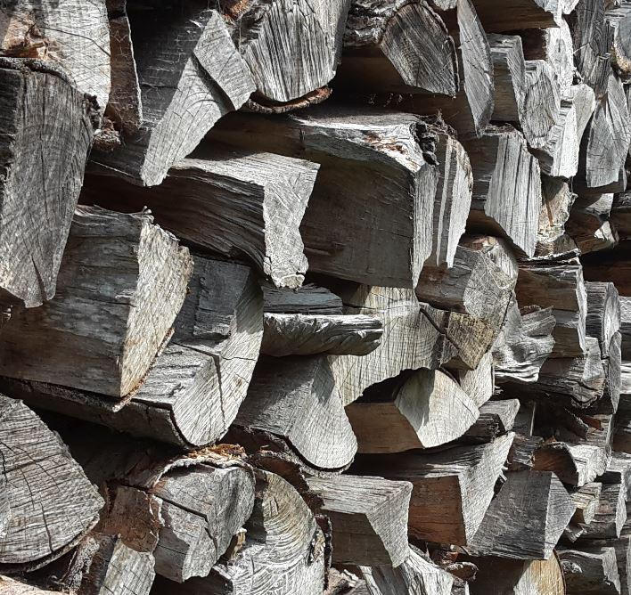 Was-hilft-gegen-Wespen-morsches-Holz-entfernen