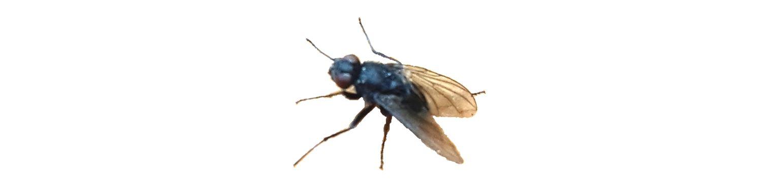 was hilft gegen fliegen 12 tipps die ihnen helfen k nnen. Black Bedroom Furniture Sets. Home Design Ideas