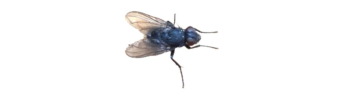 Was-hilft-gegen-Fliegen