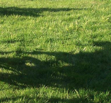 Was-hilft-gegen-Sonnenbrand-Schatten